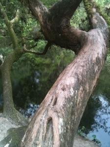 20130624-180354.jpg