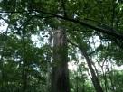 20130919-191305.jpg