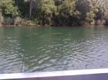 Crystal River Manatees