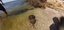 horseshoe crabs @ port Canaveral @ garzafx.com