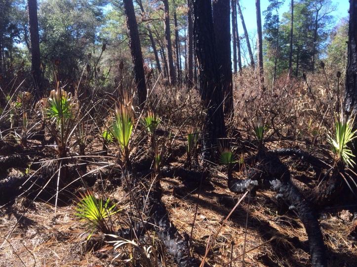 North-South Cross Trail in Wekiva Springs State Park @ Apopka, Florida 20140116-173932.jpg