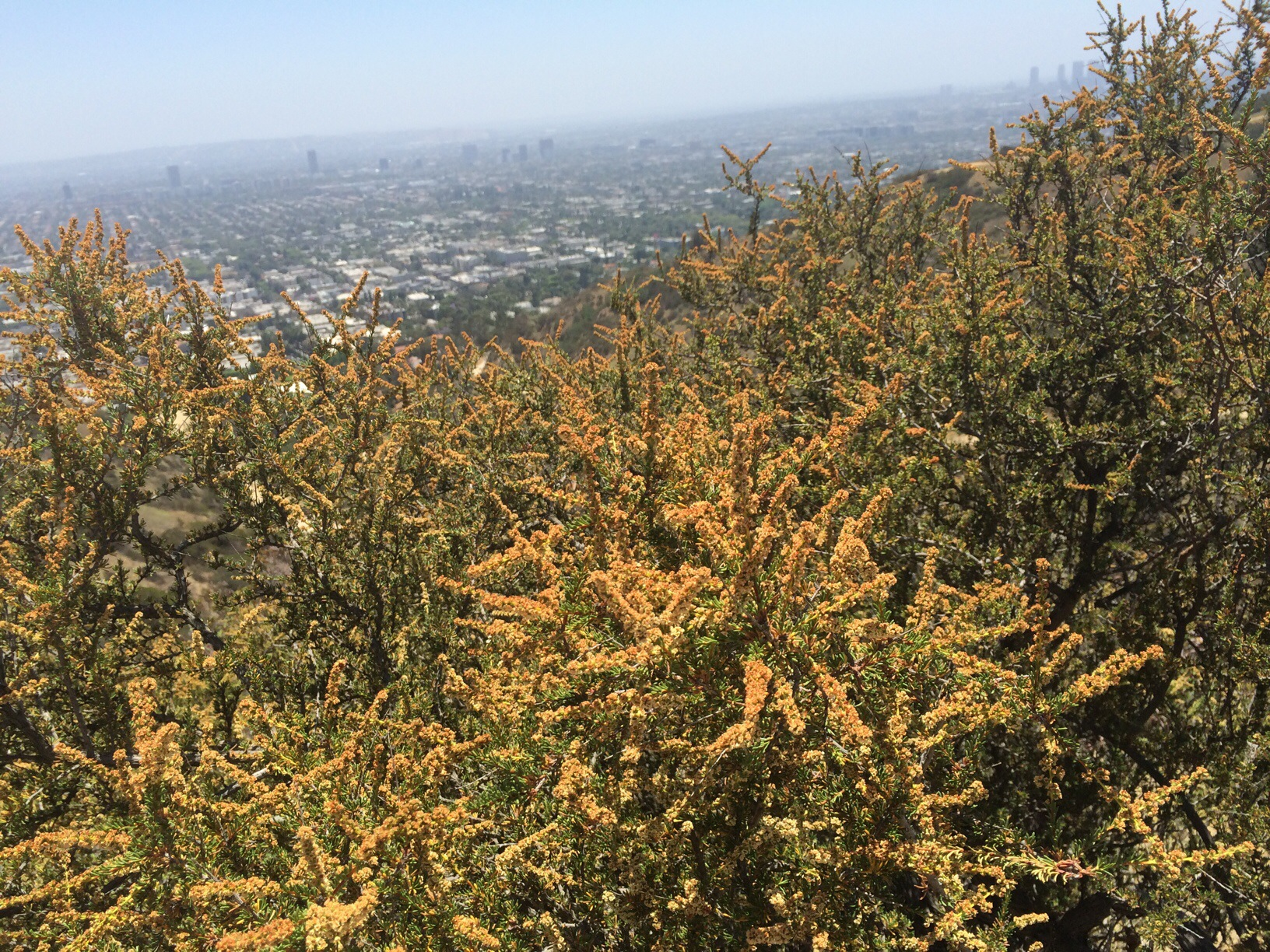 Runyon Canyon Park @ Los Angeles, California @ garzafx.com 1.jpg