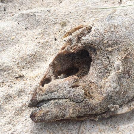 dead fish at CCSS