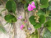 flowers ccss