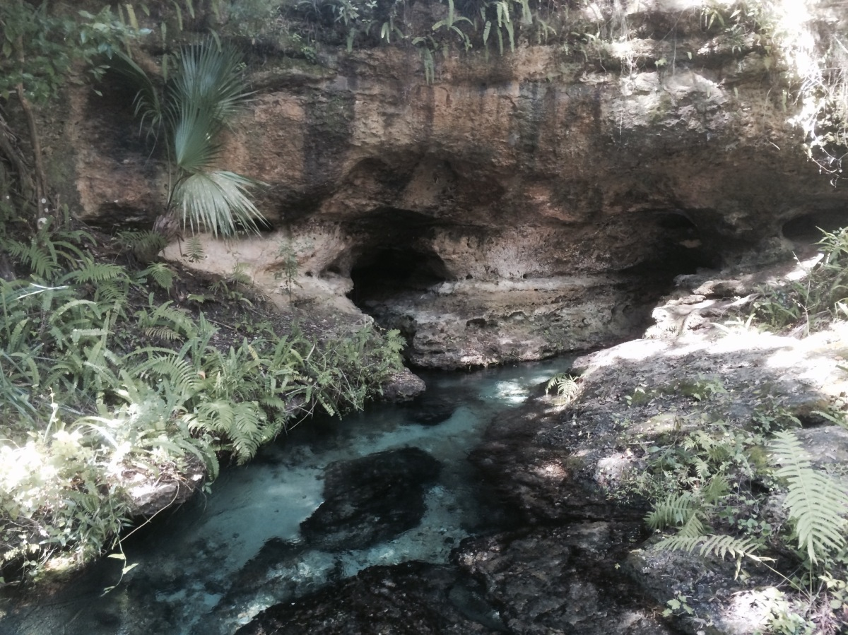rock springs kelly park apopka, florida