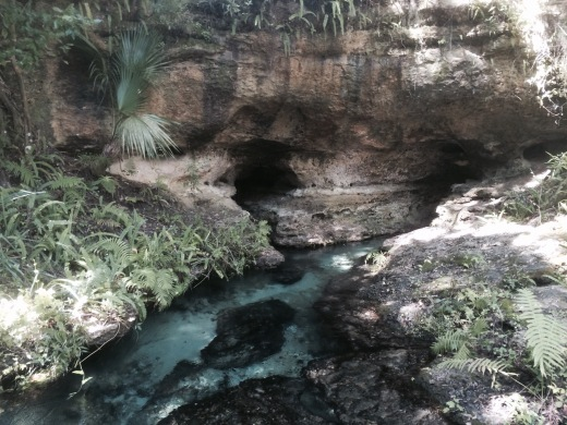 rock springs in kelly park apopka florida