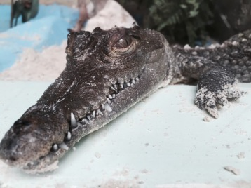 Blue Skies above Ellie Schiller Homosassa Springs Wildlife State Park 3 Gator @ Garzafx.com