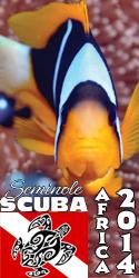 fishtall2